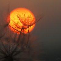 Таинственный закат. :: Марина Соколова