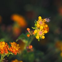 Flowers :: Александр Колесников