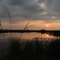 закат :: Татьяна Гузева