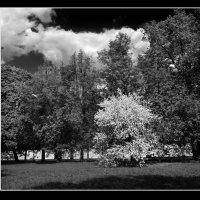 Весенний этюд в чёрно-белых тонах... :: Nikanor