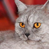 Кошка :: Ivan Dem