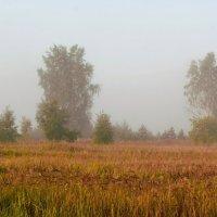 Утро туманное :: Николай Масляев