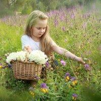 Лето в сиреневом цвете :: Елена Волгина