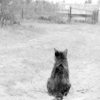 В соседней деревне и кошки пушистее и коты злее))) :: Ольга