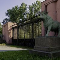 Быки возле бывшего мясокомбината :: Елена Кириллова