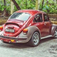 Колорадский жук:))) :: Arman S