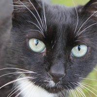 Мудрые глаза серьезного кота :: Елизавета Бородина