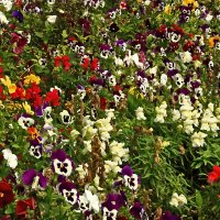 Разноцветье :: Светлана