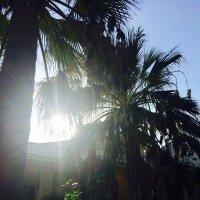 солнце в пальмах :: Elena Pashkova