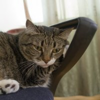 Кошки тоже грустят :: Anita Lee