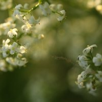цветы :: Darya Voronova
