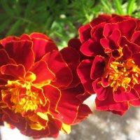 Любимые цветы :: татьяна