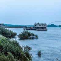 Плывут по реке :: Света Кондрашова