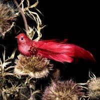 Жар-птица :: Gavrila68 -Женя