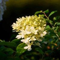 Цветы :: Евгений