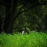 Мгновение лета :: Игорь Герман