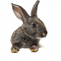 Кролик :: Alex Bush