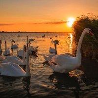 В золоте заката. :: Svetlana Sneg
