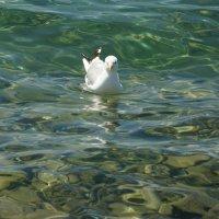 Чистые воды Хубсугула :: Наталья Тимофеева