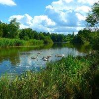 Лебединое озеро :: Nina Yudicheva