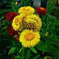 Летние цветы :: Nina Yudicheva