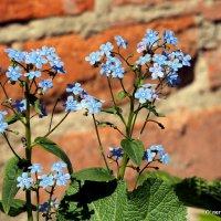 городские цветы-про незабываемое :: Олег Лукьянов