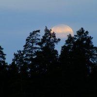 Луна :: Волк-ПРИЗРАК Фомин Виталий