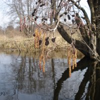 """""""Смотрелась в воды Усманки, ольха..."""" :: Irina Gizhdeu"""