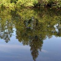 Отражения. Река Ширшема, дачи, от Северодвинска 7км. :: Михаил Поскотинов