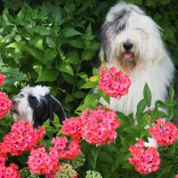 девочки в цветочках :: Лариса Батурова