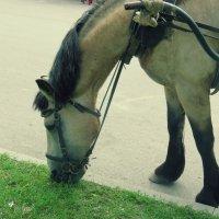 Лошадь :: Яна Пашко