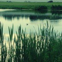 Озеро :: Яна Пашко