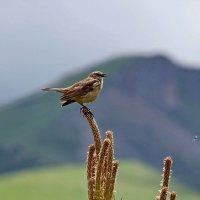 Птичка :: Виталий Юрчук