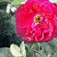 Цветок :: Арина Бокун