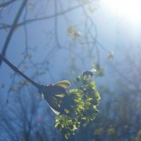 Весна в солнечном тумане :: Даша Полевая