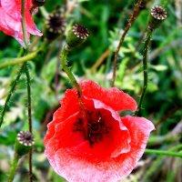 Цветок :: Anna Monti