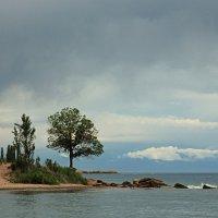 Дерево у озера :: Татьяна Д