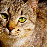 Cat :: Yulia Konovalova