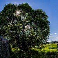 Лето в провинции! :: Павел Данилевский