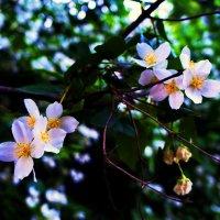 Цветы :: Ashotto Kolpakovski