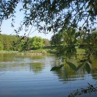 Озеро в Рай-Еленовке :: Наталья Тимошенко