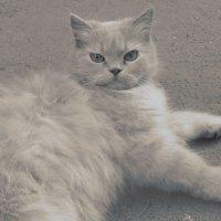 Cat :: Dana Grace