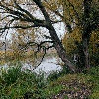 Река Хомора :: Юрий Морозов