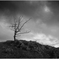 Одиночество... :: Евгений Герасименко