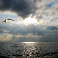 Над седой равниной моря. :: Татьяна Бобкова