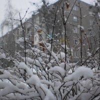 В марте снова выпал снег... :: Наталья Тимошенко
