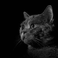 Мой кот Тишка! :) :: Артур Садреев