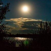 В свете лунной тени ! :: Sergey Pechenkin