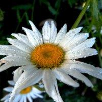 Умытая дождем :: Надежда Буденная