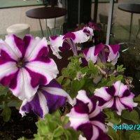 Цветы :: Сергей МЫРДИН